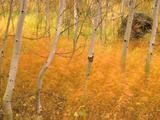 Wallpaperi Th_13338_Aspens_and_Windblown_Grasses6_Idaho_122_910lo